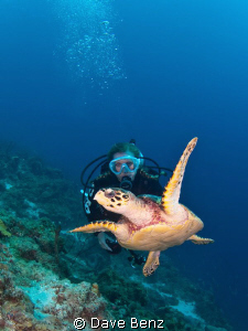 Diving with sweet turtle in the great caribbean sea. by Dave Benz 